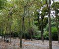 Przerywnik: Zielony Paryż