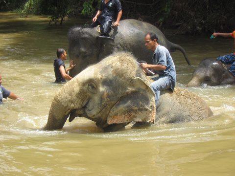 Kąpiel ze słoniem – recenzja