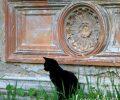 Sielanka w Górnych Łużycach: ruiny pałaców i…