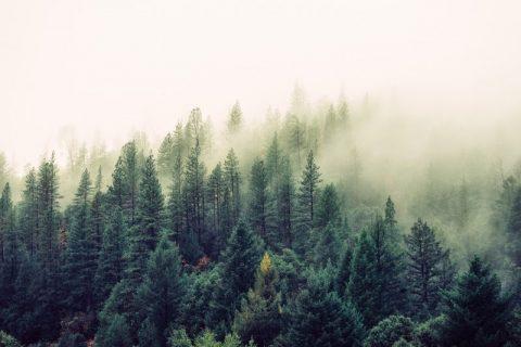 Wayward Pines – mroczna droga